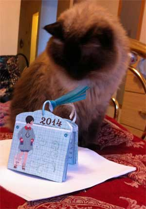 cat looking at tag calendar book